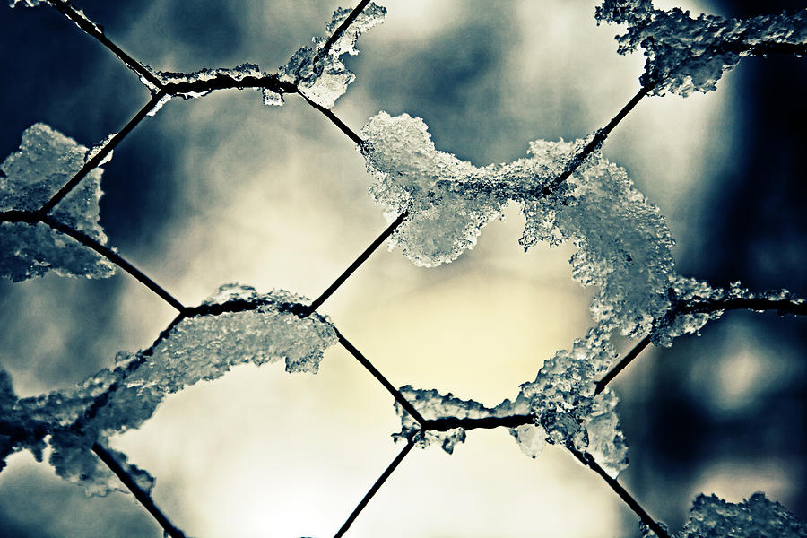 Chainlink Fence Photograph  - Chainlink Fence Fine Art Print
