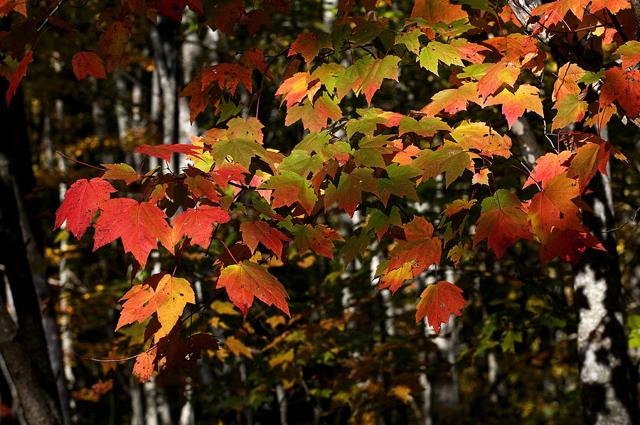 Fall Photograph - Changing Of The Colors by Rich Franco