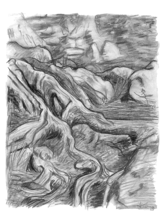Charcoal Drawing Of Gnarled Pine Tree Roots In Swampy Area Drawing