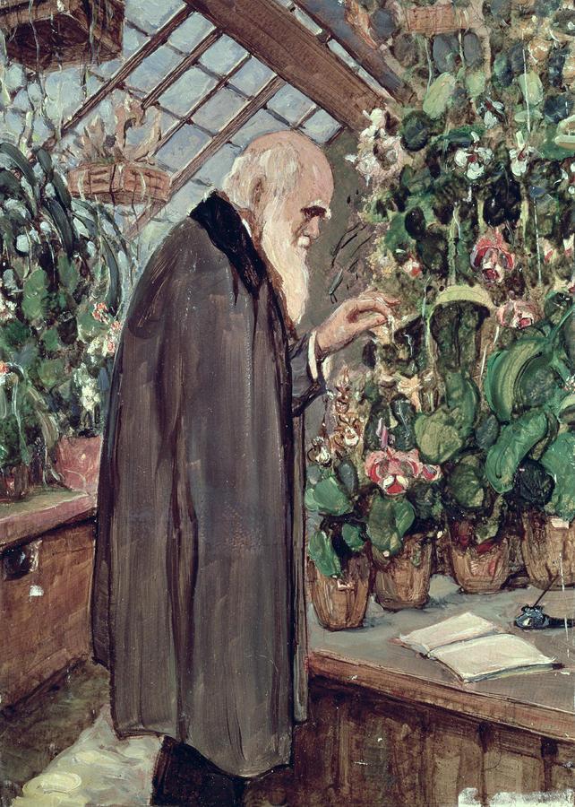 Charles Robert Darwin Painting