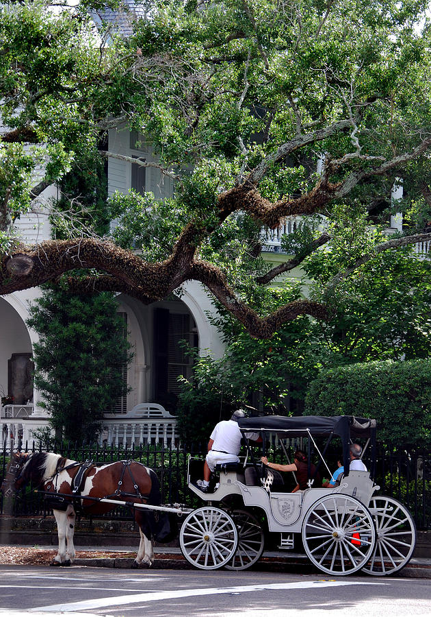 Charleston Buggy Ride Photograph