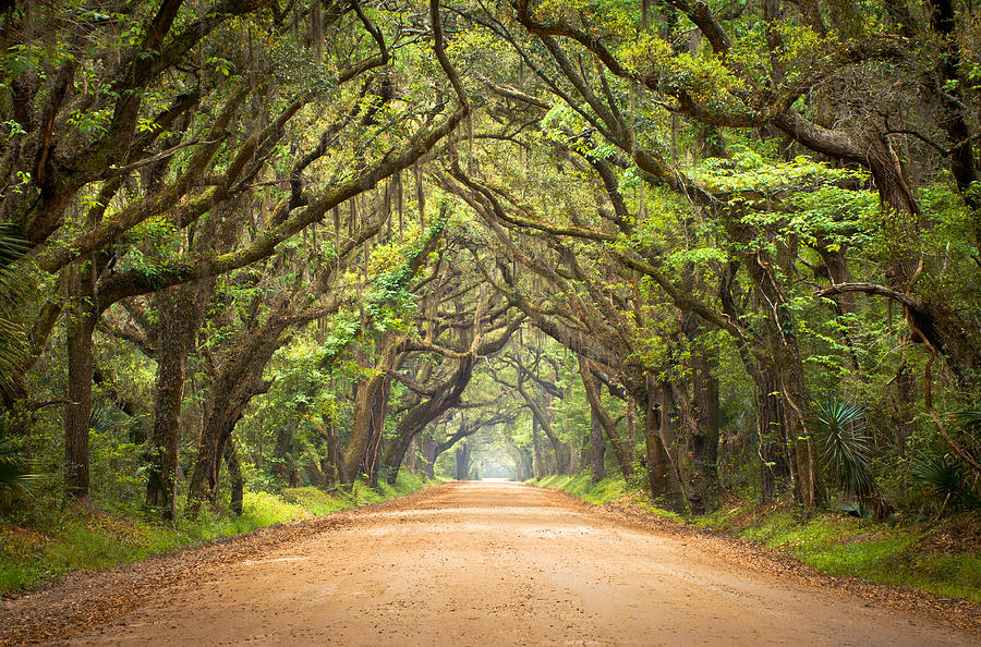 Charleston Sc Edisto Island - Botany Bay Road Photograph  - Charleston Sc Edisto Island - Botany Bay Road Fine Art Print