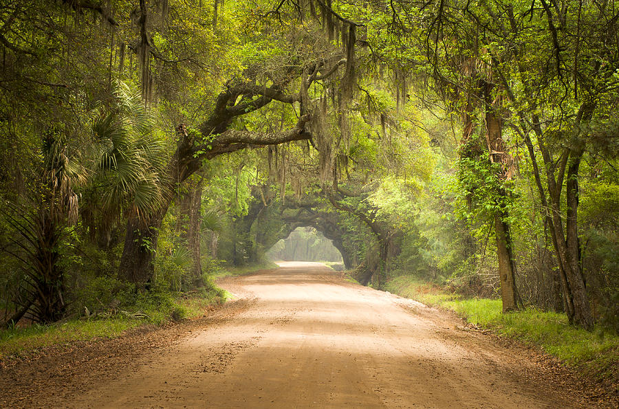 Charleston Sc Edisto Island Dirt Road - The Deep South Photograph