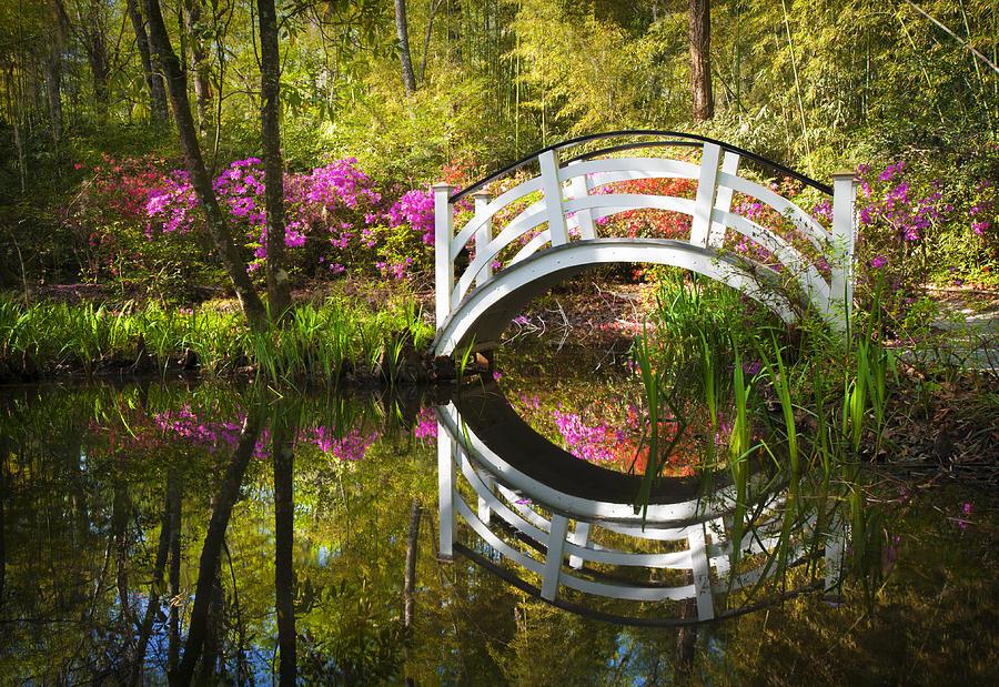 Charleston sc magnolia plantation spring blooming azalea flowers garden by dave allen for Magnolia gardens charleston sc