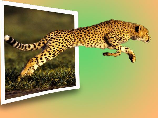 Cheetah Digital Art