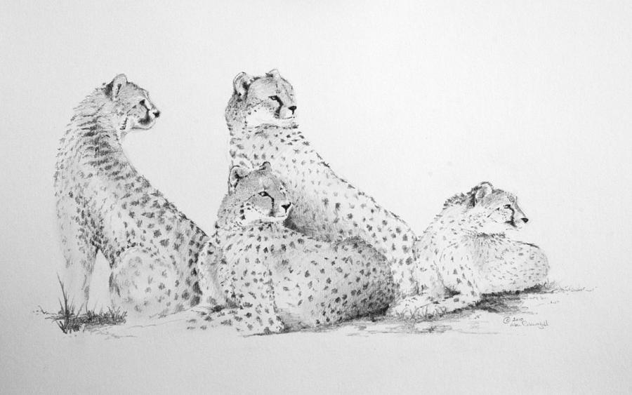 Cheetah Group Drawing
