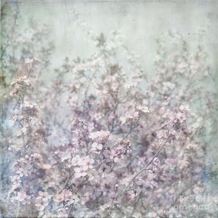 Cherry Blossom Grunge Photograph