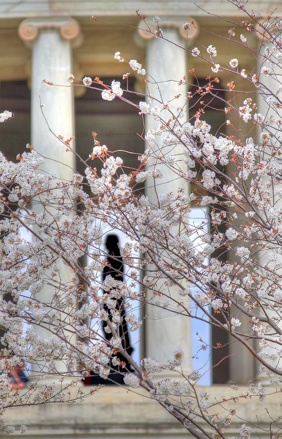 Metro Photograph - Cherry Blossoms Washington Dc 1 by Metro DC Photography