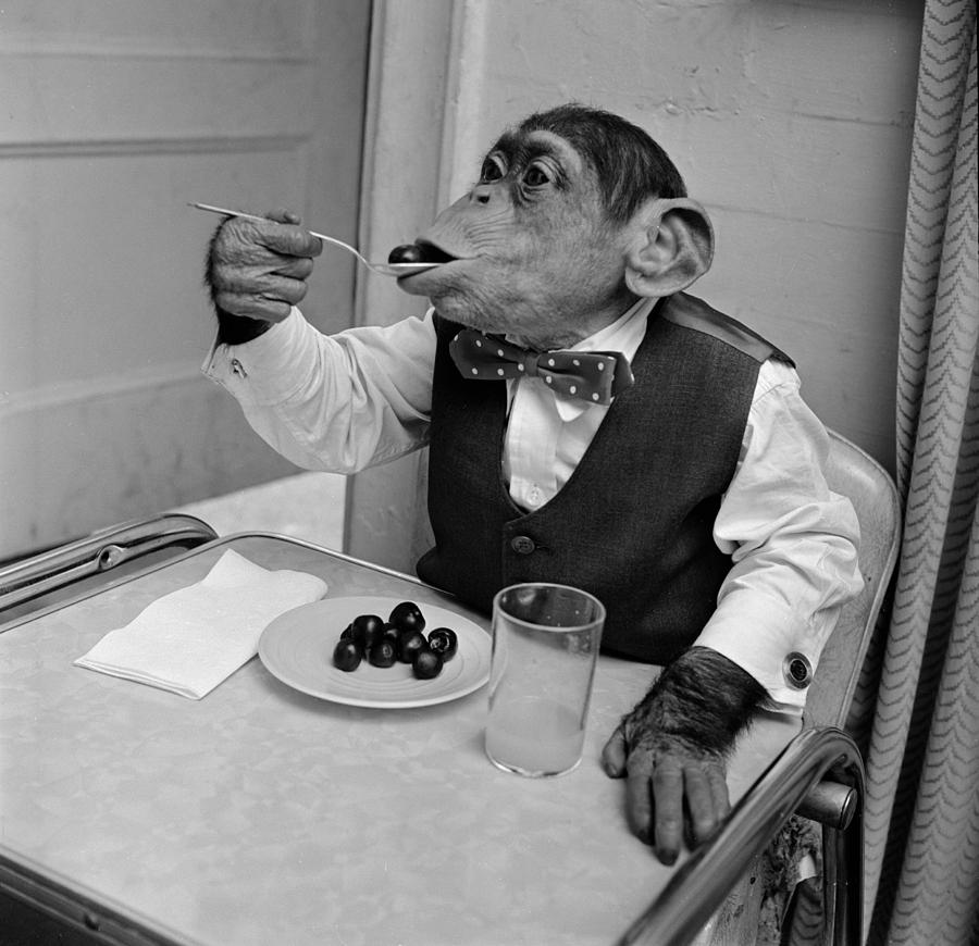 Square Photograph - Cherry Chimp by Vecchio