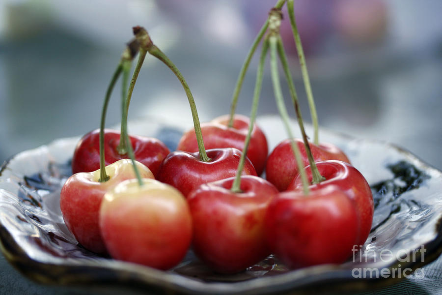 Cherry For You Photograph  - Cherry For You Fine Art Print