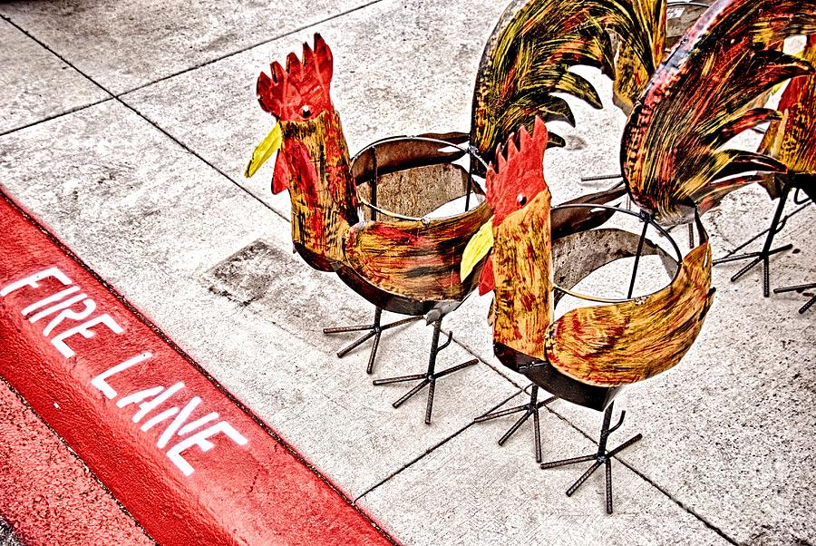 Chicken Photograph - Chicken Crossing by Ken Williams