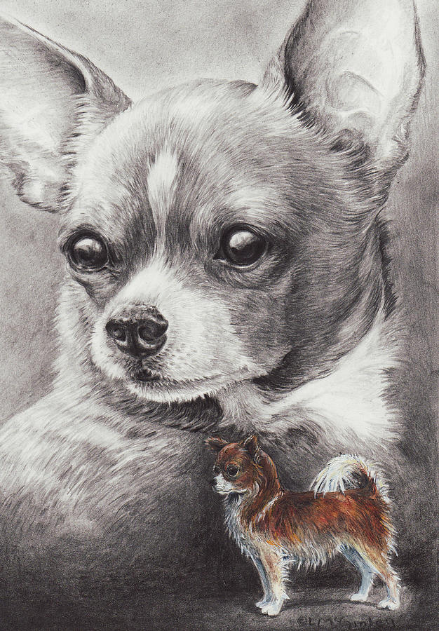 Chihuahua by Laurie McGinley