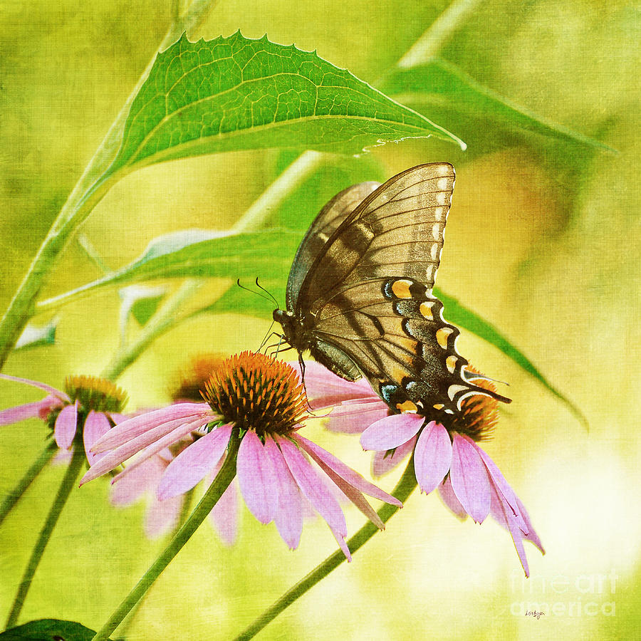 Butterfly Photograph - Child Of Sun And Summer by Lois Bryan
