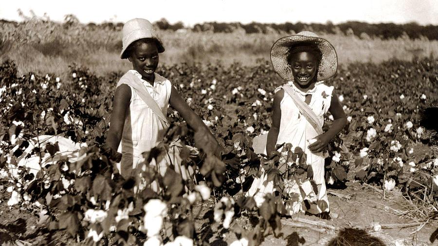 Children Picking Cotton, Late 1800s Photograph by Everett  Cotton Plantations 1800s