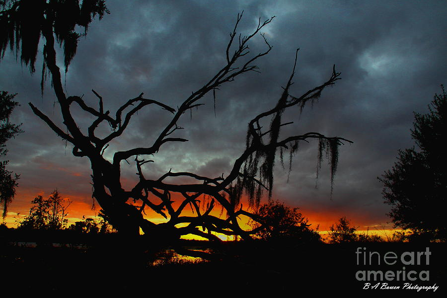 Chilling Sunset Photograph  - Chilling Sunset Fine Art Print