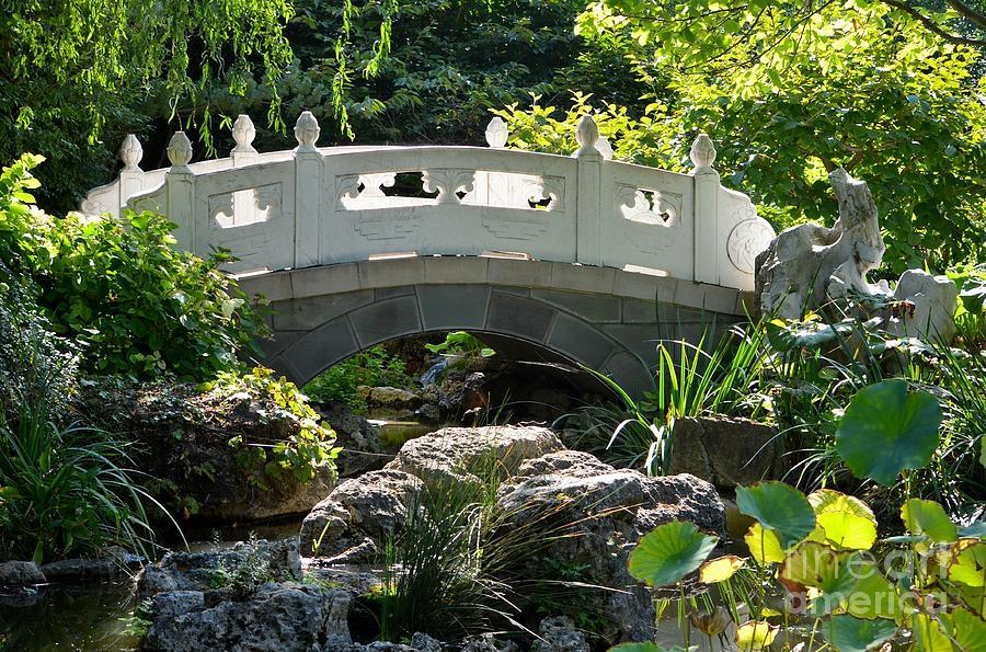 Chinese Garden Bridge Photograph