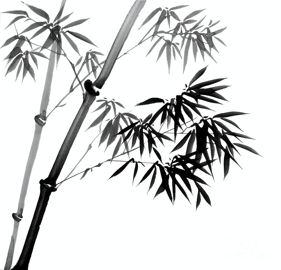 bamboo drawing - photo #4