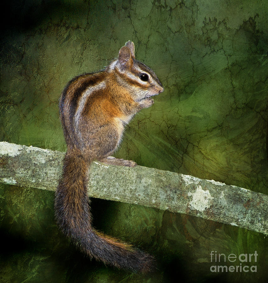 Chipmunk In The Forest Photograph  - Chipmunk In The Forest Fine Art Print