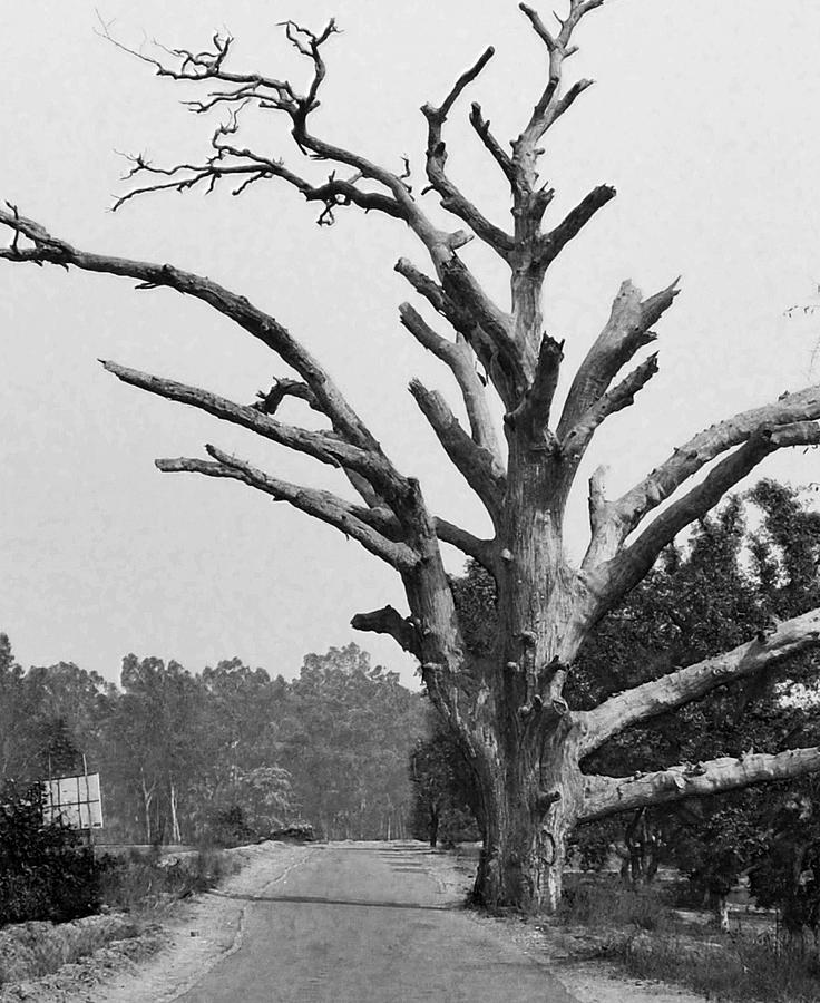 Chiseled Tree In Highway Photograph