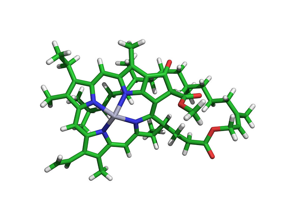 chlorophyll molecule photograph by dr tim evans