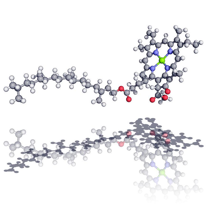 chlorophyll molecule photograph by laguna design