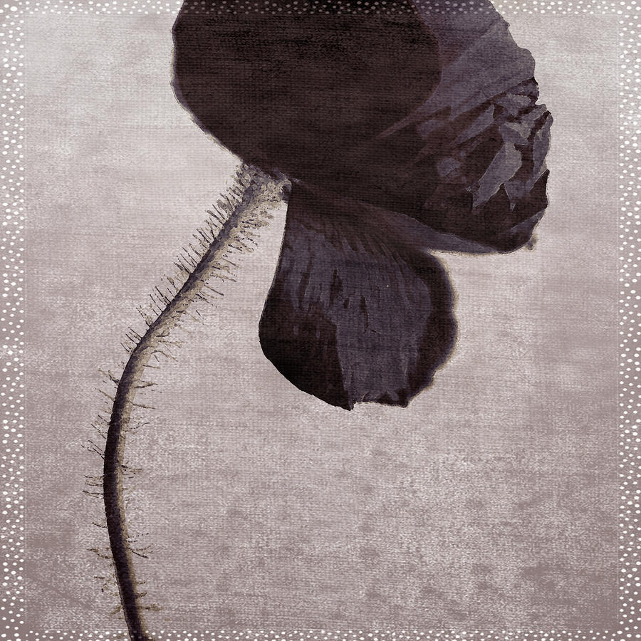 Chocolate Poppy Photograph  - Chocolate Poppy Fine Art Print