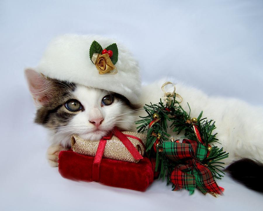 gattini natale