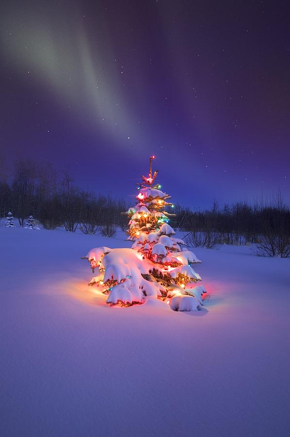 Christmas Tree Glowing Under The Photograph
