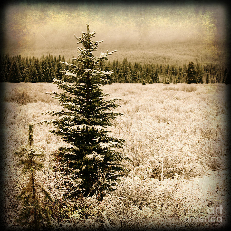 Christmas tree in a pine forest snow covered