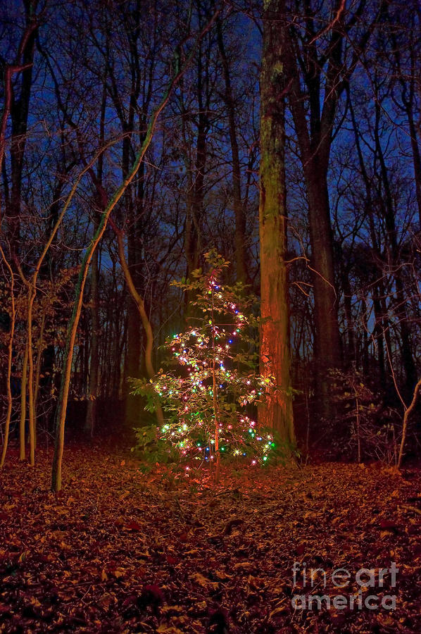 Christmas tree in forest photograph