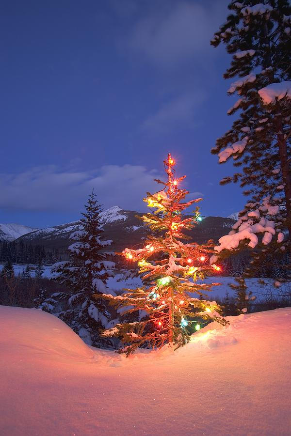 Christmas Tree Outdoors At Night Photograph  - Christmas Tree Outdoors At Night Fine Art Print