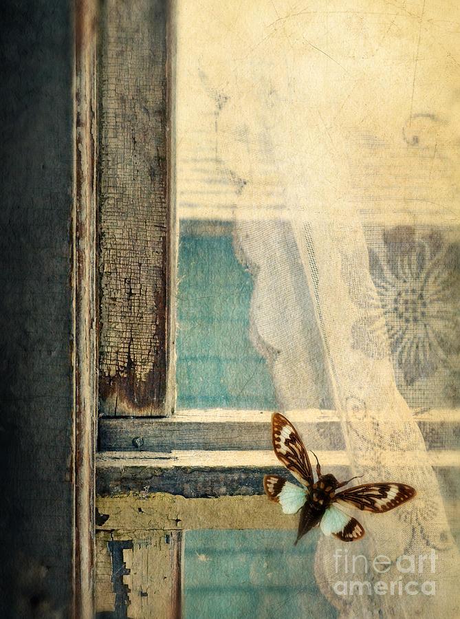 Cicada On Window Photograph