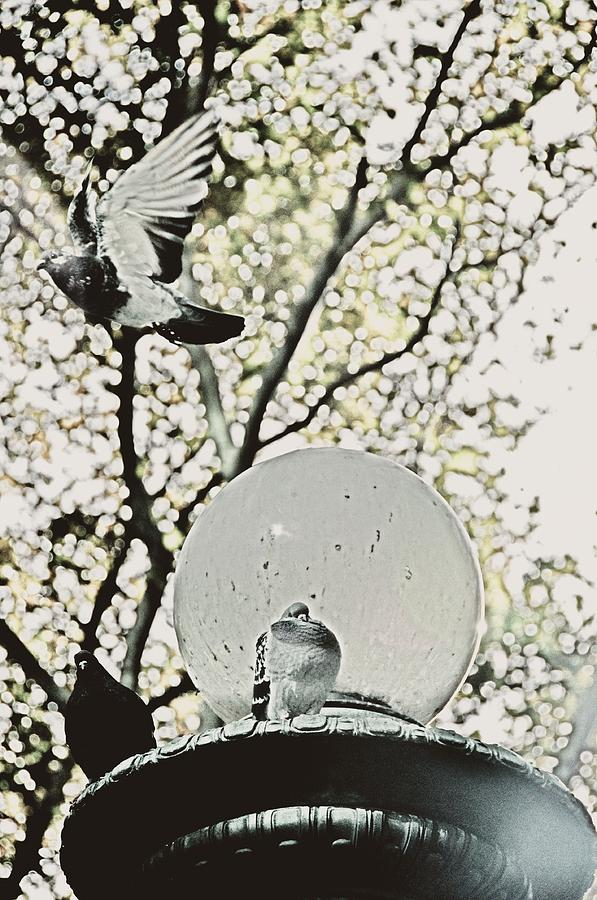 City Doves Photograph  - City Doves Fine Art Print