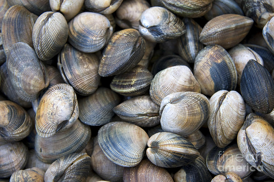 Clam Shell Background Photograph