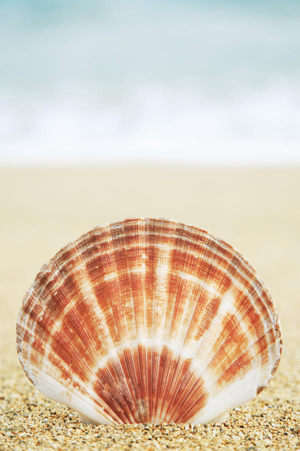 Clam Shell Photograph  - Clam Shell Fine Art Print