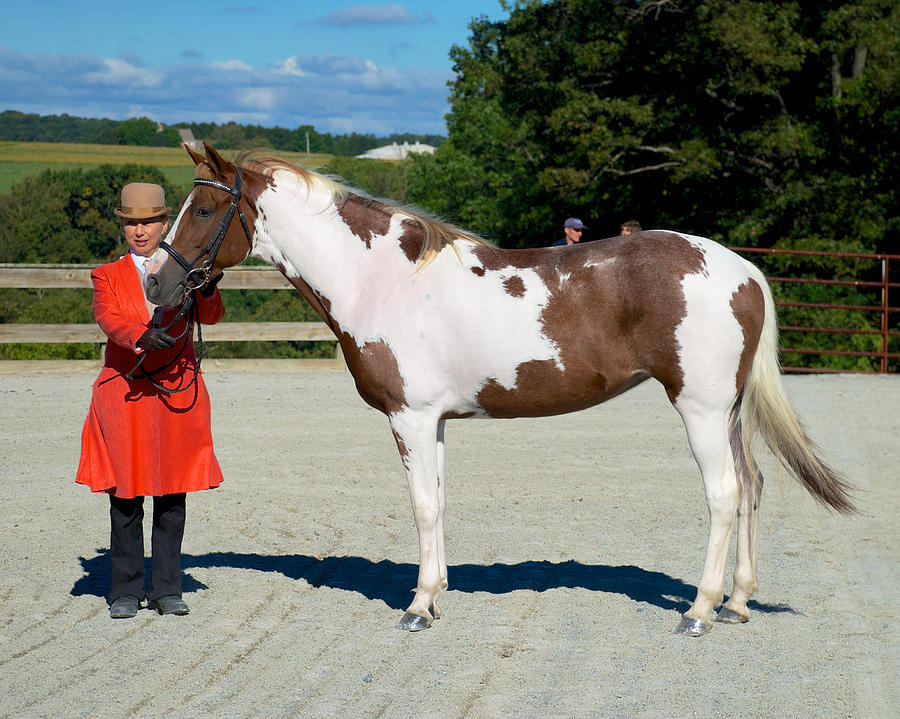 Class 03 In-hand Horse Or Pony English 16 Photograph  - Class 03 In-hand Horse Or Pony English 16 Fine Art Print
