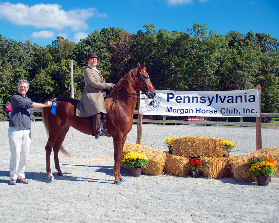 Class 11 Adult Walk-trot Pleasure 18 Photograph