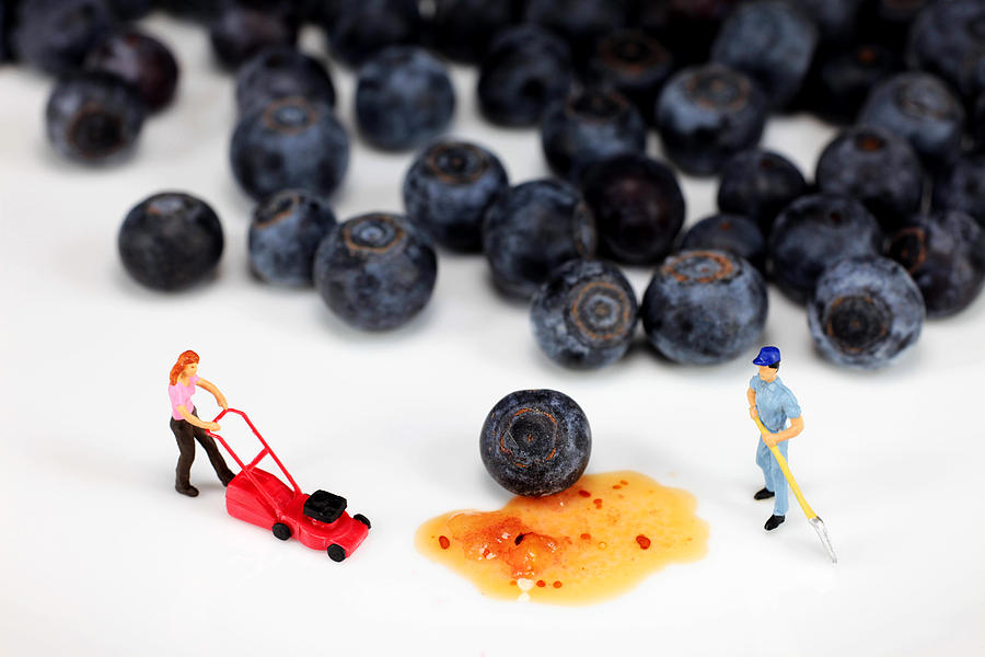 Cleaning Blueberry Juice Photograph  - Cleaning Blueberry Juice Fine Art Print