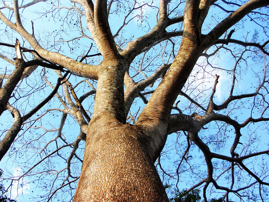 Tree Photograph - Climb To The Sky by Rosvin Des Bouillons