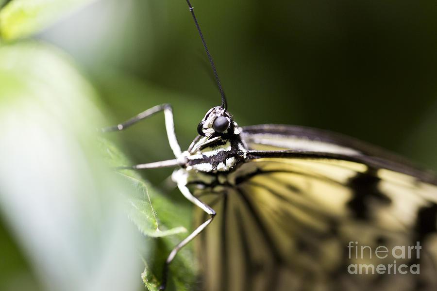 Butterfly Photograph - Close Up by Leslie Leda