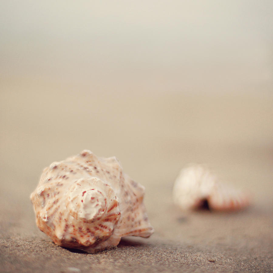 Close Up Of Shells On Beach Photograph