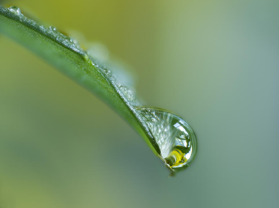 Close Up Of Water Drop On Leaf Photograph by Darwin Wiggett    Water Drop Photography On Leaf