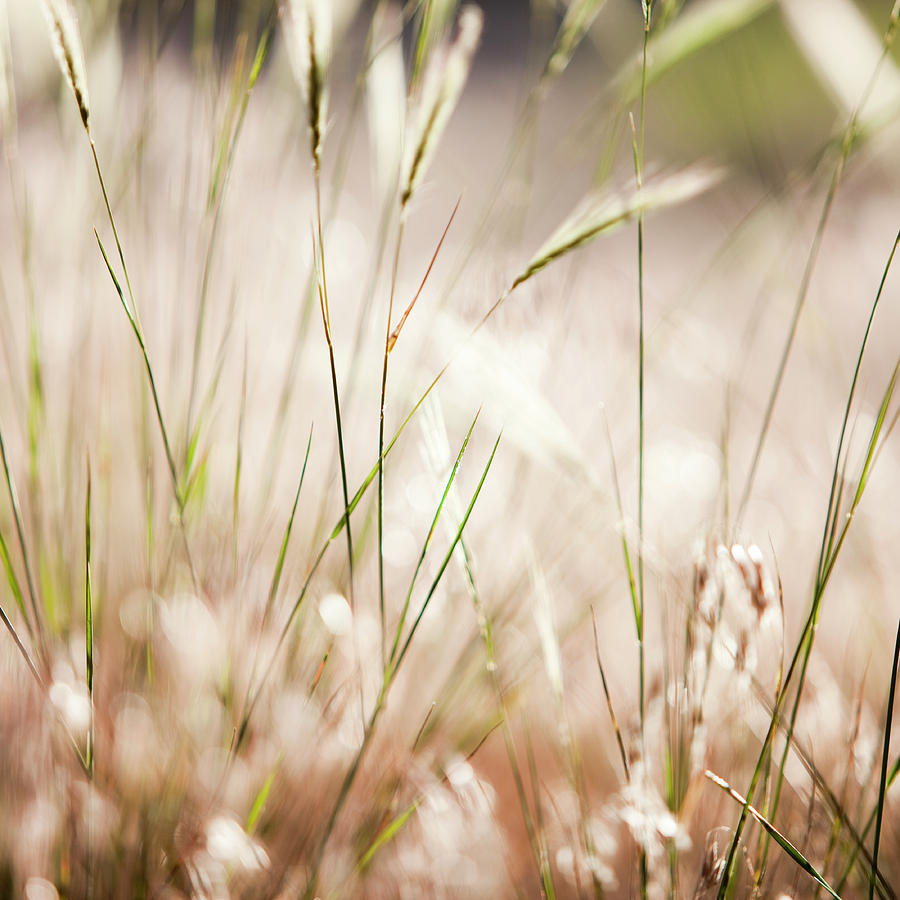Close Up Of Windswept Grasses, Dusk Photograph  - Close Up Of Windswept Grasses, Dusk Fine Art Print
