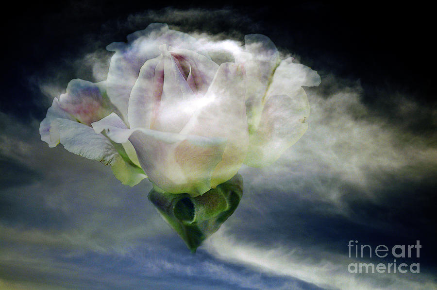 Cloud Rose Photograph  - Cloud Rose Fine Art Print
