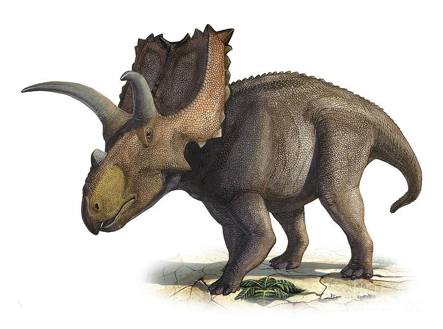 Horizontal Digital Art - Coahuilaceratops Magnacuerna by Sergey Krasovskiy