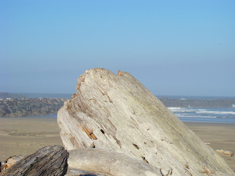 Coastal Art Prints Driftwood Ocean Beach Sky Photograph