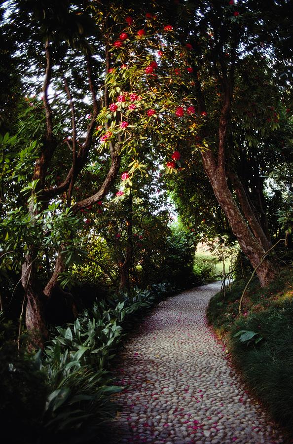 Paintings Of Cobblestone Paths : Cobblestone path winding among photograph by sam abell