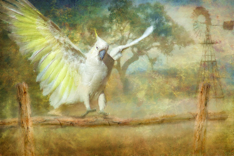 Cockatoo Dreaming Photograph  - Cockatoo Dreaming Fine Art Print
