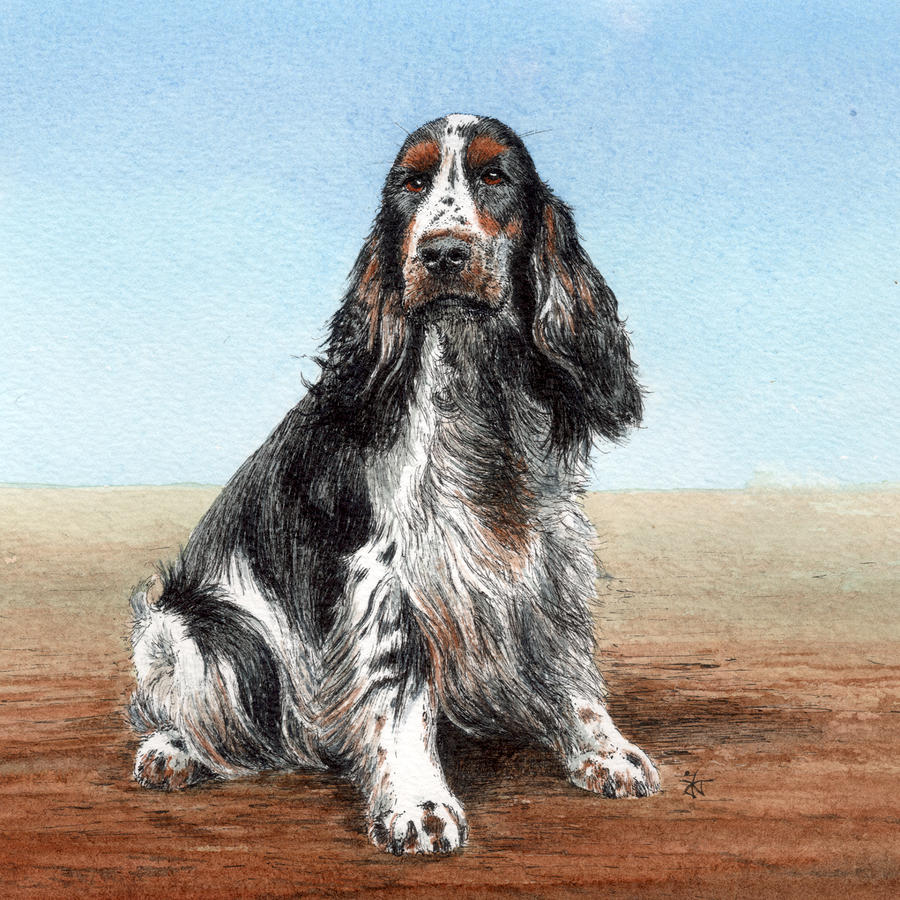 Cocker Spaniel Drawing  - Cocker Spaniel Fine Art Print