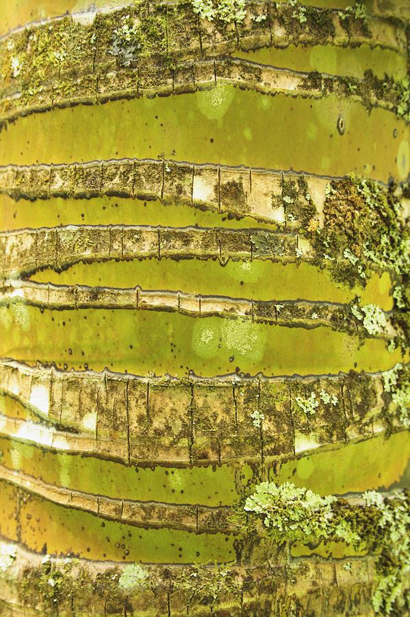 Coconut Palm Bark 1 Photograph